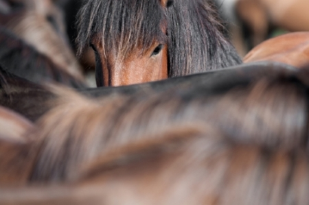 IFEAL, Equine Facilitated Human Development, Equine Facilitated Psychotraumatology, psychotherapist qualifications, equine therapy courses, equine assisted therapy training